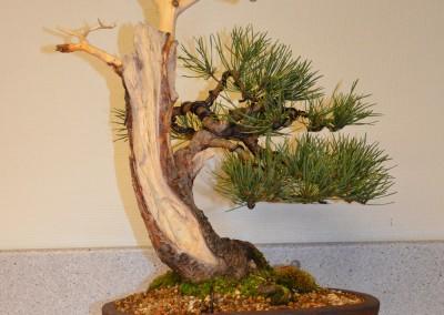 Yama-bonsai_Bjorn_085