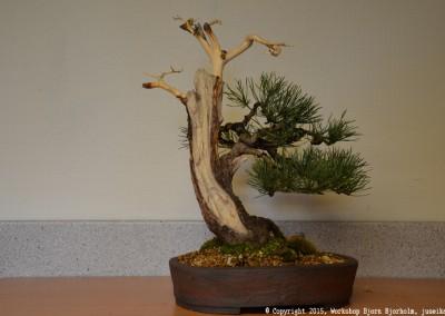 Yama-bonsai_Bjorn_086