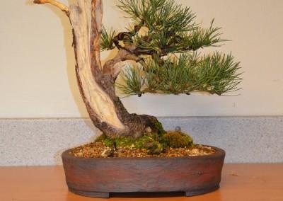 Yama-bonsai_Bjorn_088
