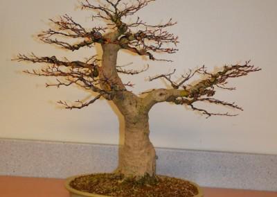 Yama-bonsai_Bjorn_089