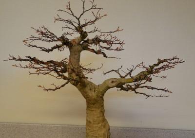 Yama-bonsai_Bjorn_090