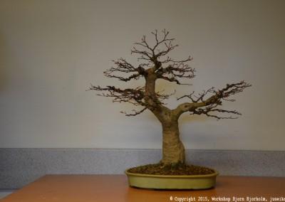 Yama-bonsai_Bjorn_092