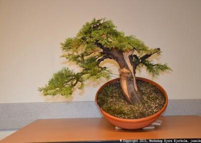 Yama-bonsai_Bjorn_094