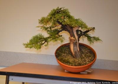 Yama-bonsai_Bjorn_095