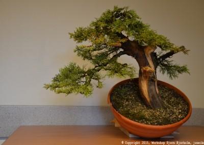 Yama-bonsai_Bjorn_096