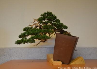 Yama-bonsai_Bjorn_098