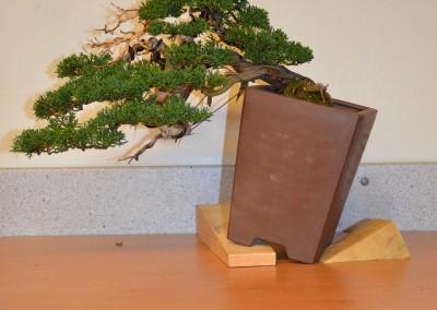 Yama-bonsai_Bjorn_099