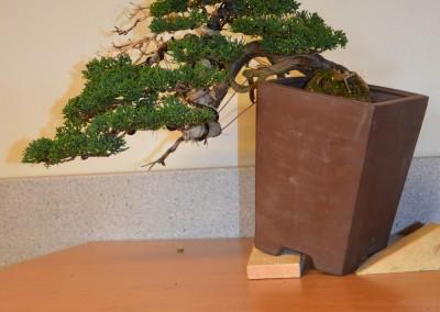 Yama-bonsai_Bjorn_100