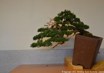 Yama-bonsai_Bjorn_101