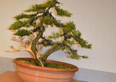 Yama-bonsai_Bjorn_103