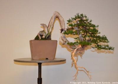 Yama-bonsai_Bjorn_104