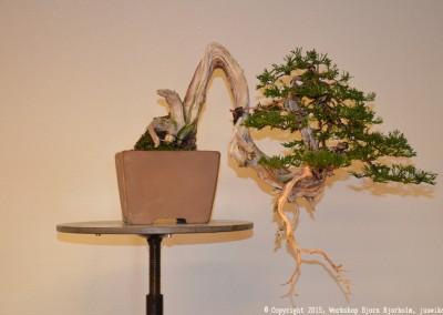 Yama-bonsai_Bjorn_105
