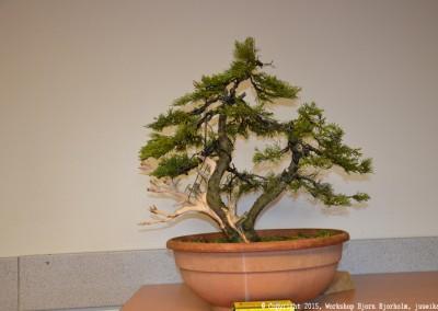 Yama-bonsai_Bjorn_106