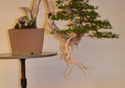 Yama-bonsai_Bjorn_107