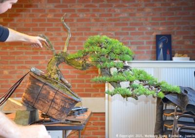 Yama-bonsai_Bjorn_108