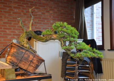 Yama-bonsai_Bjorn_109