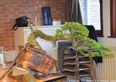 Yama-bonsai_Bjorn_110
