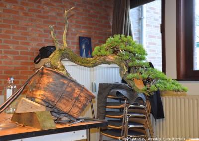 Yama-bonsai_Bjorn_111