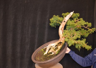 Yama-bonsai_Will_004