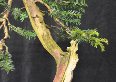 Yama-bonsai_Will_015