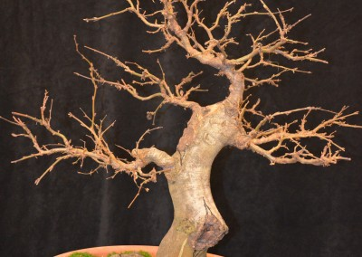 Yama-bonsai_Will_020