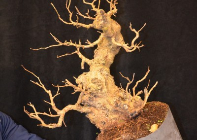 Yama-bonsai_Will_024