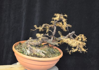 Yama-bonsai_Will_025