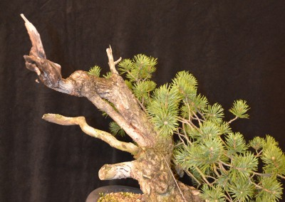 Yama-bonsai_Will_034