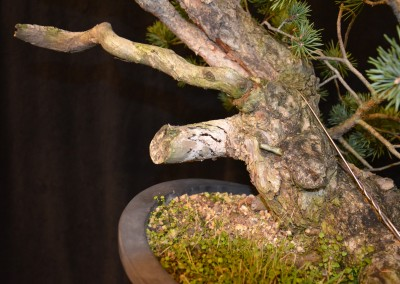 Yama-bonsai_Will_036