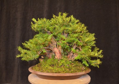 Yama-bonsai_Will_040