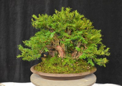 Yama-bonsai_Will_041