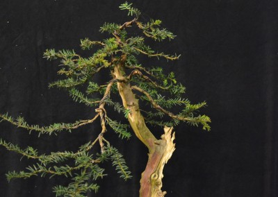 Yama-bonsai_Will_048