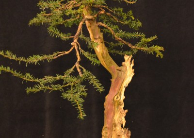 Yama-bonsai_Will_049