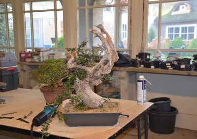 Yama-bonsai_Will_075