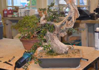 Yama-bonsai_Will_076