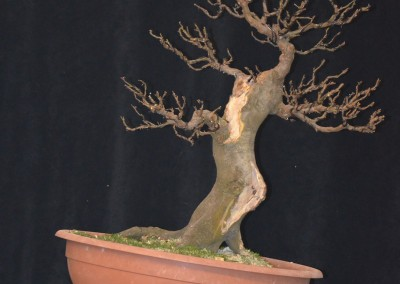 Yama-bonsai_Will_099