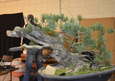 Yama-bonsai_Will_105