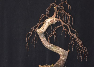 Yama-bonsai_Will_119