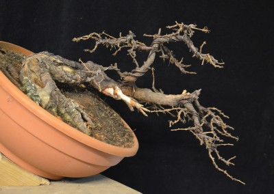Yama-bonsai_Will_129