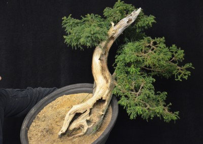 Yama-bonsai_Will_130