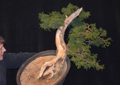 Yama-bonsai_Will_131