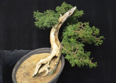 Yama-bonsai_Will_132