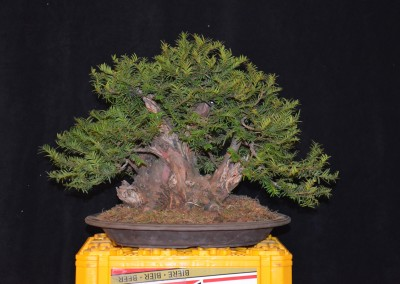 Yama-bonsai_Will_140