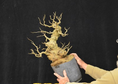 Yama-bonsai_Will_145