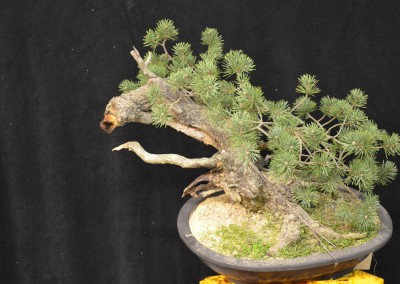 Yama-bonsai_Will_157
