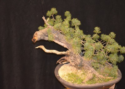 Yama-bonsai_Will_158