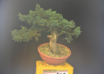 Yama-bonsai_Will_167