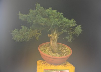 Yama-bonsai_Will_168