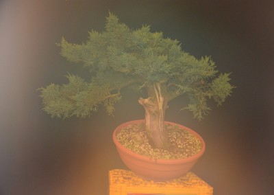 Yama-bonsai_Will_169