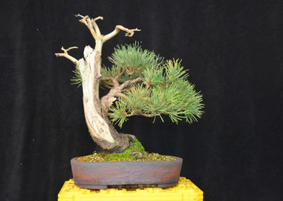 Yama-bonsai_Will_183